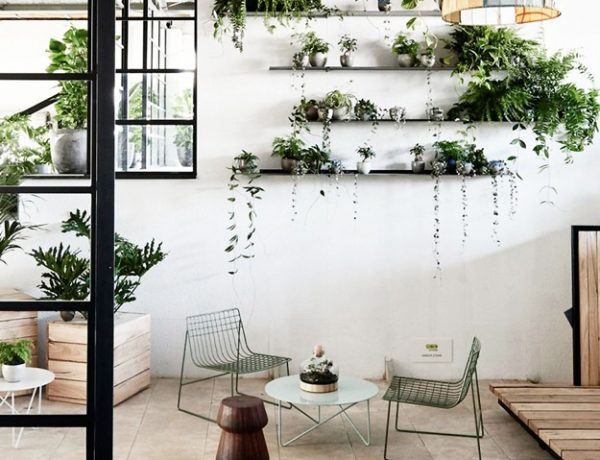 wall plant gallery